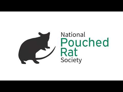 We Are The National Pouched Rat Society Gambian Pouched Rat