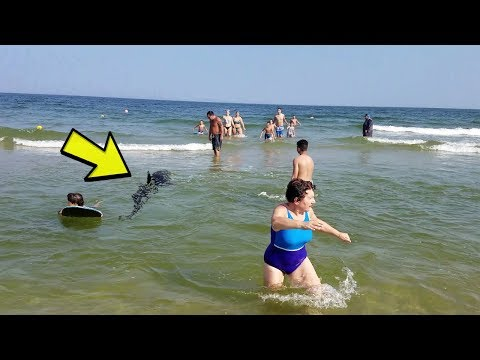 Rare Benny Great White Shark attack at the Jersey shore!  4k high def shark attack 8-29-18