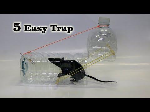 5 Easy Mouse/Rat Trap