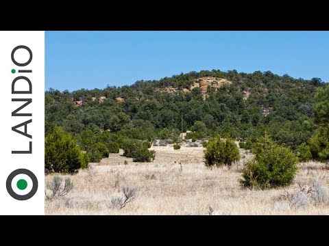 Land For Sale : 6.51 Acre Homesite with Electricity & Road Frontage in New Mexico