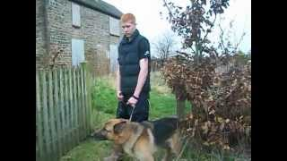 Security-boy Threatening Protect The Wilderness Gardeners With Attack Dog.