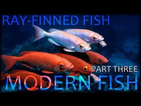 Ray Finned Fish (part3) : Modern Fish