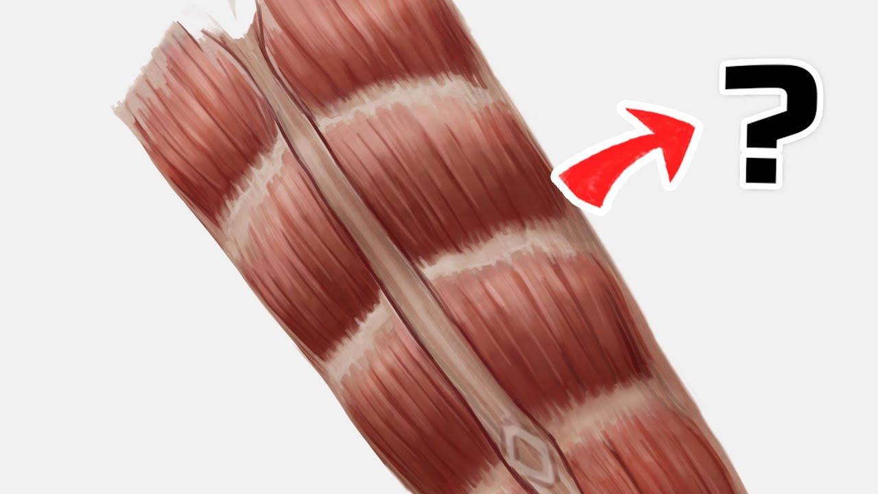 Muscle Anatomy - RECTUS ABDOMINIS #SHORTS