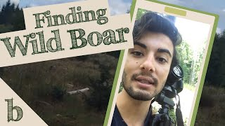 Finding Wild Boars in the Forest of Dean   Wildlife Vlog
