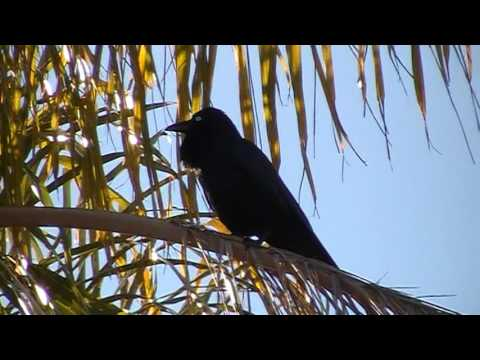 2 Mornings of birds in my street