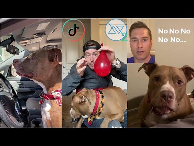 Funny Robby And Penny TikTok Videos Compilation 2020 (W/Titles). Best Robby And Penny Videos!