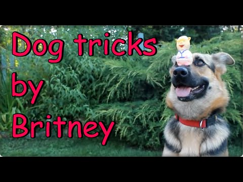 Amazing dog tricks by german shepherd Britney 2 !!!