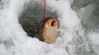 Русская рыбалка зимой Рыбалка на Волге зимой бесплатно Зимняя рыбалка