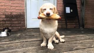 Sid Loves Food (compilation)