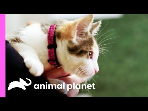 Backstage with the Kitties of the Kitty Halftime Show | Puppy Bowl XV