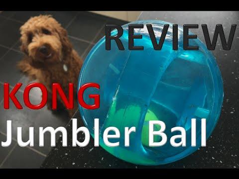 FUDGE the cockapoo *KONG Jumbler Ball* review