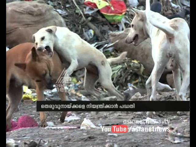 Kerala Launches Safe Kerala Project for control stray dog
