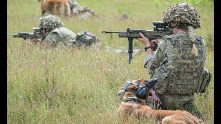 Military dogs are put down for being 'unfit for service' - Daily News