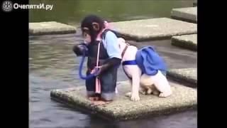 как шимпанзе и бульдог реку переплывали