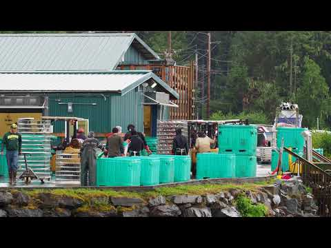 Sea Level Seafoods, Wrangell, AK