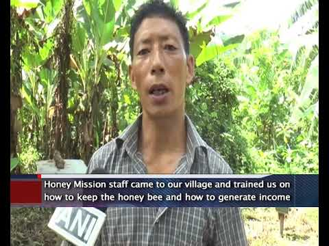 Nagaland Turns To Beekeeping As An Alternate Source Of Income: Nagaland News