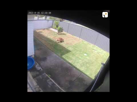 Arenti Camera Dog Running Around the Courtyard