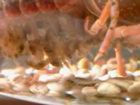 Baby Red Clarkii Crayfish