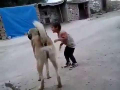 Kangal ile Oynayan Çocuk
