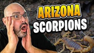 Bugs in Arizona | Living in Arizona - Living in Phoenix Arizona (2018)
