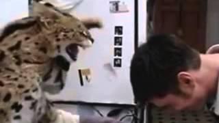 Прикольные кошки  котяра жуткий наркоман  Забавно смотреть!!