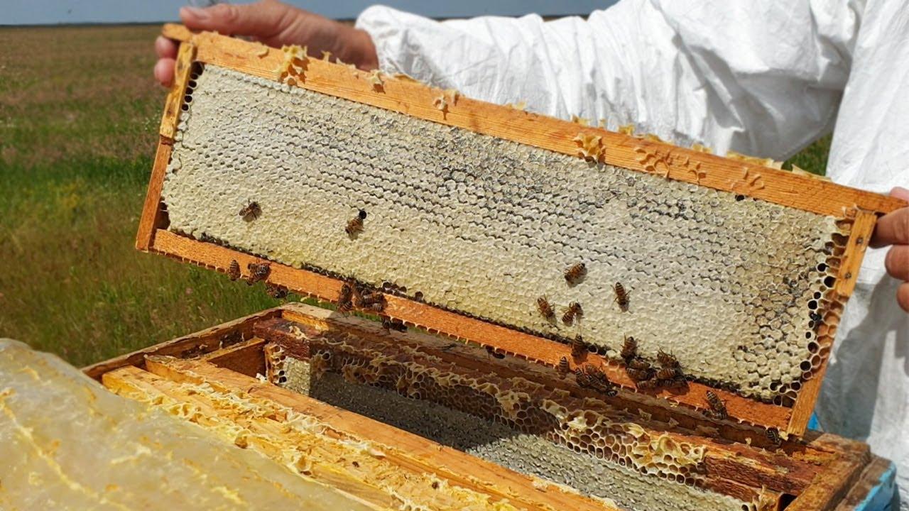 Вы НИКОГДА не узнаете, если не побываете на пасеке! ЭТО познавательно, смотрите. Пчеловодство и мёд