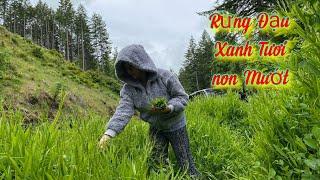 Phát Hiện Đám Đậu Rừng Ngon Quá Xá Hái Về Đãi Mẹ Nhỏ Cali(Cuộc Sống Người Việt Ở Mỹ)#339