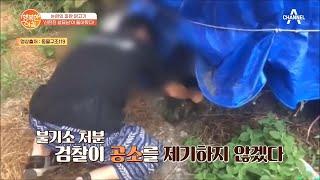 닭고기에 쥐약을.. 13년 전 '신탄진 살묘남'이 돌아…