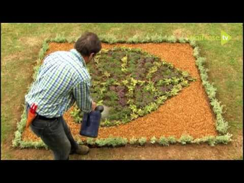How to make a thyme parterre - Waitrose Garden