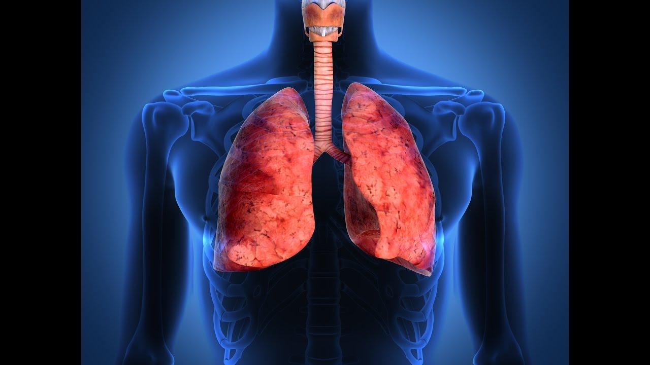 Función de los pulmones humanos / Importancia del los pulmones en la ...