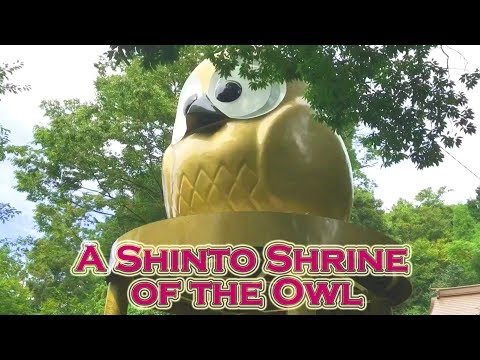 A Shinto Shrine of the Owl that brings good fortune  幸運を呼ぶフクロウづくしの神社