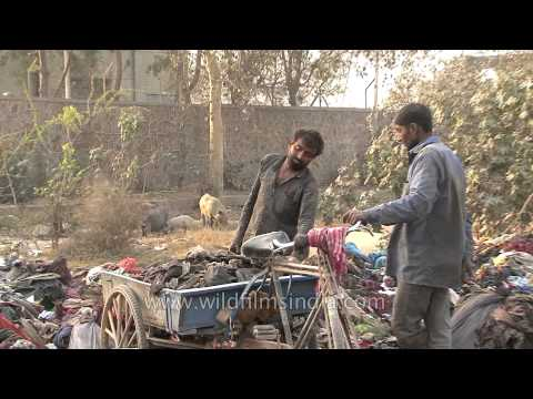 Rag pickers collect garbage: Delhi