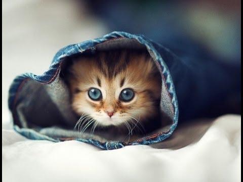 image de chat le plus mignon du monde