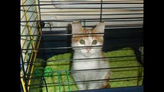 10 причин взять кошку из приюта
