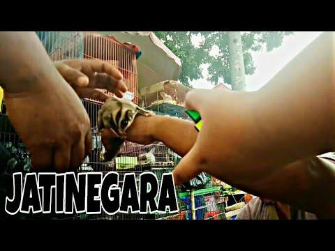 Harga Hewan Piaraan di Pasar Jatinegara