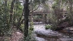 Alligator Creek, Starke, FL