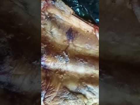Червивое мясо в Охе