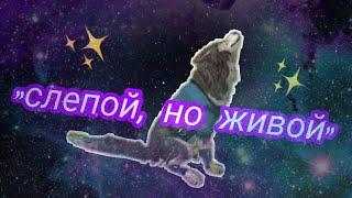 """Трейлер сериала """"слепой, но живой"""""""