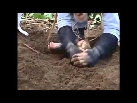 Chú Khỉ Thông Minh Phiêu Lưu Ký 33 - YouTube