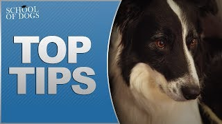 School of Dogs   Top Tips for Fireworks