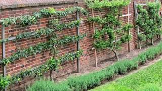 Trellis style in garden art