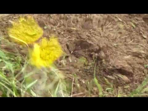 MARK KNOPFLER, HILL FARMER`S BLUES, Lyrics
