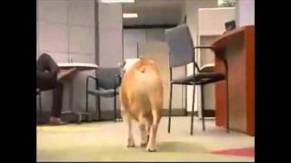 Fellowes Office Paper Shredder Bulldog Commercial Video