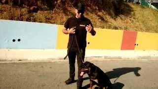 Vídeo Aula De adestramento,Cães que Pula.