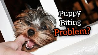 How to Stop Puppy from Aggressive Biting