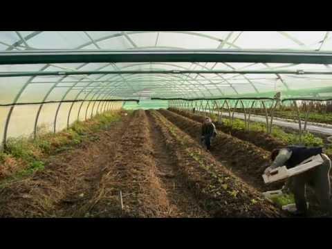 ferme de Keréré methode de buttes en terre maraicher bio locmariaquer