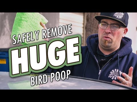 How To SAFELY Remove Bird Droppings From Car Paint Using Opti-Clean | DETAILS WITH LEVI