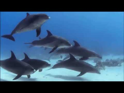 """Дельфинотерапия"""" Исцеляющие звуки"""