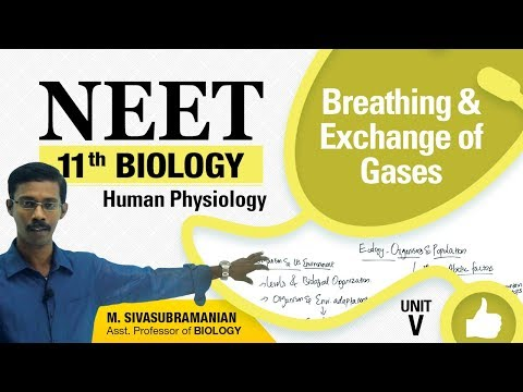 NEET 11th Biology || Breathing & Exchange of Gases || Human Physiology || Unit-V