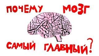 СКАЗКА Почему мозг самый главный? / Папа и Герман #26